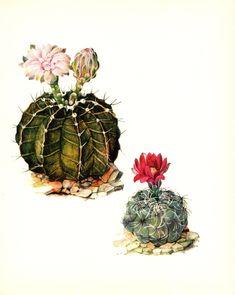 Cactus Drawing, Cactus Art, Cactus Flower, Flower Wall, Kaktus Illustration, Illustration Blume, Watercolor Illustration, Illustration Flower, Desert Art