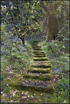 Nature Aesthetic, The Secret Garden, Secret Gardens, Dream Garden, Aesthetic Pictures, Beautiful Gardens, Mother Nature, Aesthetic Wallpapers, Beautiful Places