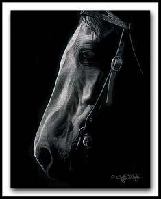 'Good Ole Boy' -Horse Scratchboard Art