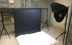 Creating Quality Portraits in Small Spaces with the Savage LED Portrait Kit Photographic Studio, Shelter Dogs, Animal Photography, Savage, Small Spaces, Baby Strollers, Led, Portraits, Small Living Spaces