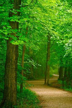 Correr por este bosque....