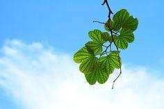 Listy, Větvička, Větev, Obloha, Modrá