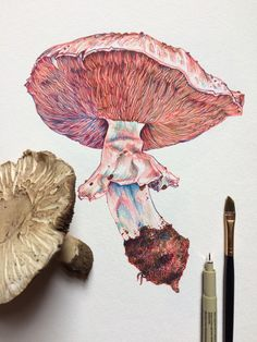 favd_noelbadgespugh-November 07 2016 at Art Sketches, Art Drawings, Illustration Art, Illustrations, Observational Drawing, Mushroom Art, Mushroom Drawing, Botanical Art, Graphic