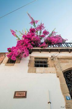 Kalavasos, Larnaca, Cyprus