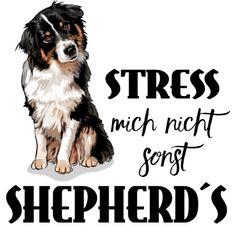 Australian Shepherd - Stress mich nicht