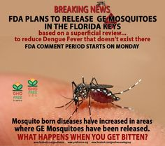 If I lived in Florida, I'd be pissed: ... release Genetically Engineered Mosquitoes in the Florida Keys to control Dengue Fever where there is no Dengue Fever