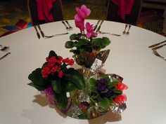 Potted blooming plants double as a centerpiece and a favor! Designed By: hillside-consultants.com