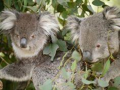 Featherdale Wildlife Park #Sydney #Australia http://www.tripadvisor.com.au/ShowForum-g255060-i122-Sydney_New_South_Wales.html