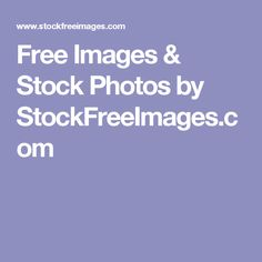 Free Images & Stock Photos by StockFreeImages.com Stock Photo Sites, Free Stock Photos, Marketing Communications, Wolves, Dean, Free Images, Printables, Wolf, Print Templates