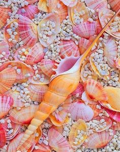 Seashells with Colorful Colors at the Beach