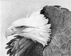 eagle pencil drawing giclee print by AlpoArts on Etsy, $30.00