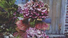 #flowleaf2015 #autumn #october #hortensia #colors #garden