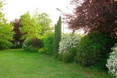 growing a backyard vegetable garden Garden Shrubs, Garden Planning, Outdoor Gardens, Boxwood Garden, Shade Garden, Beautiful Backyards, Backyard Landscaping, Backyard, Backyard Vegetable Gardens