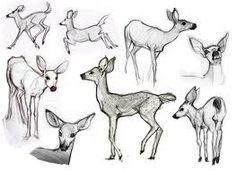 simple animal illustrations - Google Search