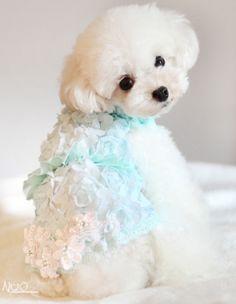 Mint Green pastel puppy dress OMG CUTE