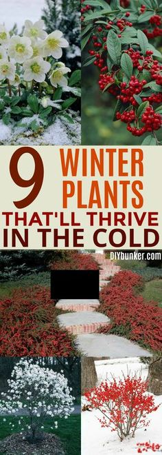 These 9 Winter Blooming Plants Are INCREDIBLE. I never knew how many beautiful plants could do well during the cold part of the year!