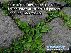 L'Astuce Naturelle Pour Désherber Entre les Dalles du Jardin.