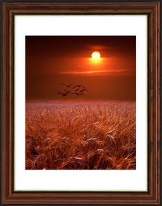 """Gulls flying over a Golden Wheat Field at Sunset in Michigan Bird Landscape Color Fine Art Landscape Photography  SHIPPING COST INCLUDED in print price for USA domestic shipping. Small extra charge for International Shipping.  MULTIPLE SIZES and PRICING: See dropdown menu on """"select a size"""" just above the """"add to cart"""" for the different sizes and prices offered.  TO PURCHASE: Select a size and price from the select a size drop down menu, add to your shopping cart and then check out using…"""