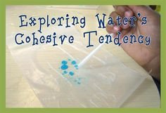 While your kiddos might not understand what a hydrogen bond is, with a few simple materials, they can witness the attractive force at work as they explore water's cohesive tendency - or in 'kid. Easy Science, Preschool Science, Preschool Lessons, Science Experiments Kids, Teaching Science, Science For Kids, Science Activities, Science Ideas, Science Fair