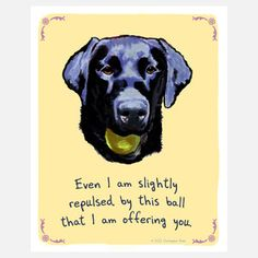 Black Lab 8x10 now featured on Fab.  I have had many of those tennis balls in my hand!