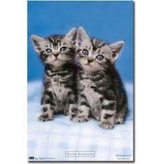 Keith Kimberlin Kitten Twins Art Poster Print - 22x34 Poster Print, 22x34 (Kitchen) http://www.amazon.com/dp/B004OYQCEG/?tag=wwwmoynulinfo-20 B004OYQCEG
