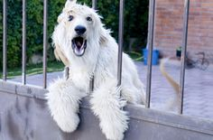 Important tips on how to stop a dog from barking Dogs are going to bark – it's what they're programed to do. There's no way to teach a dog to stop barking, but there are way to curb this habit, especially if it's excessive. We've got some tips that will teach you how to stop [...]