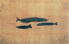 駒井哲郎 「三匹の小魚」1958