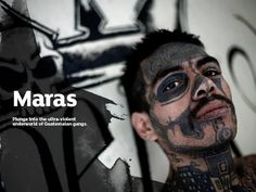 Maras its the term used for the gangs of criminals in El Salvador, Guatemala and Honduras. This persons are characterized by having a lot of specific tattoos all over the body, especially in the facial area.