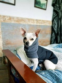 If your dog is not a Chihuahua or is a mixed breed, please contact us about making a custom coat for your dog. Please provide the following information in the Notes to Seller section at checkout: Your order will NOT be processed until we receive these measurements. Failure to