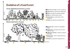 wild berries edible woodland management - Buscar con Google