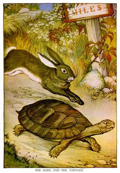 the tortoise and the hare - Google Search