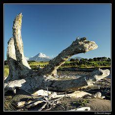Taranaki Driftwood Series Driftwood, New Zealand, Mount Everest, Coast, Mountains, Sweet, Nature, Travel, Image