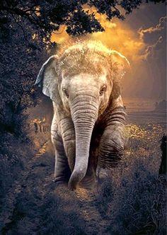 14 best elephant background images in 2017 Elephant Pictures, Elephants Photos, Animal Pictures, Elephant Images, Elephant Love, Elephant Art, African Elephant, Elephant Photography, Animal Photography