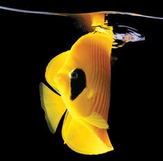 Mark Laita's Breathtaking Photos of Sea Creatures