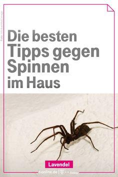 Das Haus Bleibt Vor Allem Dann Frei Von Spinnen Wenn Den Tieren Schon Der Einschlupf Unmoglich Gemacht Wird Flieg Spinne Haushalts Tipps Mittel Gegen Spinnen