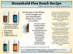 Young Living Black Pepper, Peppermint, Oregano & Orange Essential Oils: Flea Bomb Recipe// For more information regarding Young Living Oils, please contact me by visiting my website at: https://www.youngliving.org/kerrymoore56 Member Number 1665937