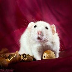 Greats pics of pet rats - Animalexpo octobre 2012