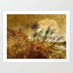 Buy Golden Sunset  by Judy Palkimas as a high quality Art Print. Worldwide shipping available at Society6.com. Just one of millions of products available.