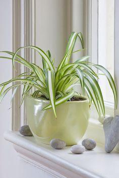 13 szobanövény, amely még a legsötétebb sarokban tengődést is képes túlélni – morzsaFARM