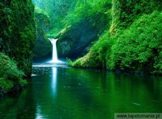 My favorite hike of all time and this isn't even the best of the 6 waterfalls: Punchbowl Falls on Eagle Creek Trail Oregon USA landscape Nature Photos Magic Places, Places To Go, Nature Images, Nature Pictures, Nature Hd, Nature Source, Abstract Nature, Life Pictures, Forest Tumblr
