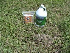 Killing Fire Ants Natural Way