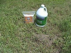 Kills fire ants! No chemicals! OK I tried this today and it was AMAZING!
