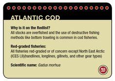 Greenpeace Seafood Red list | Greenpeace International