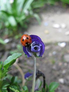had 2 beautiful ladybugs land on me 3 days apart :) makes my <3 smile kuz i kno they r sent :)