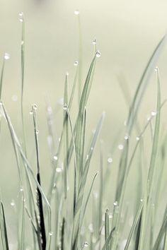 Soft Sage Green