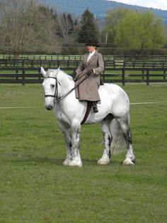 Percheron sidesaddle
