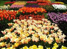 Patchwork quilt of tulips at Longwood Gardens