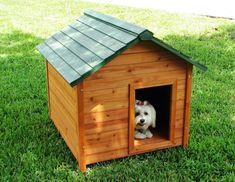 Como Construir uma Casa de Cachorro Ideal - Web Cachorros