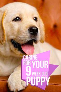 Labrador Puppy Food Chart