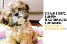Pensamentos bem-humorados de cães... - AC Variedades